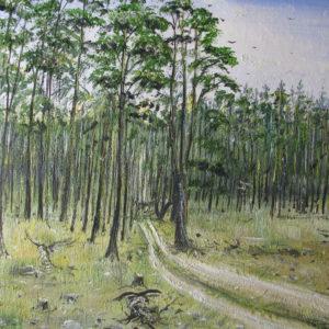Wald in Brandenburg Kopie